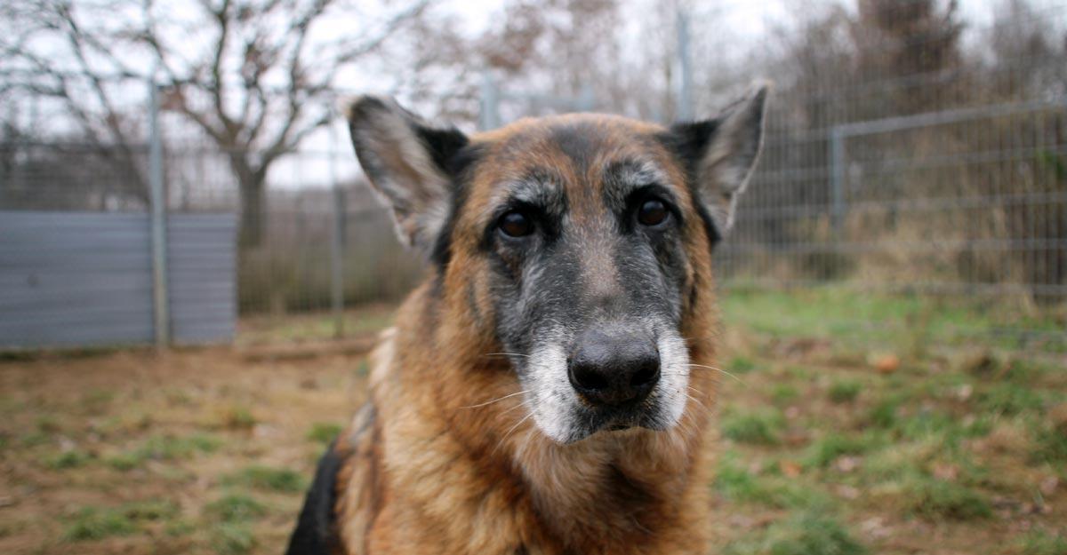 Hund Nella wohnt in der Tierherberge Einhorn e. V. und sucht ein Zuhause