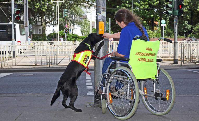 Katharina Küsters im Training mit einem Rollstuhl-Hündin.